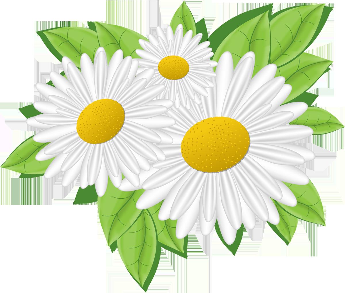 Картинки цветов ромашки для детей